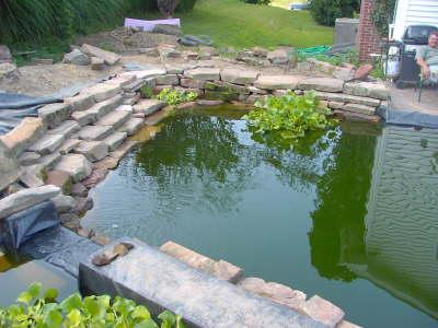 7000 gallon koi pond for Koi pond gallons