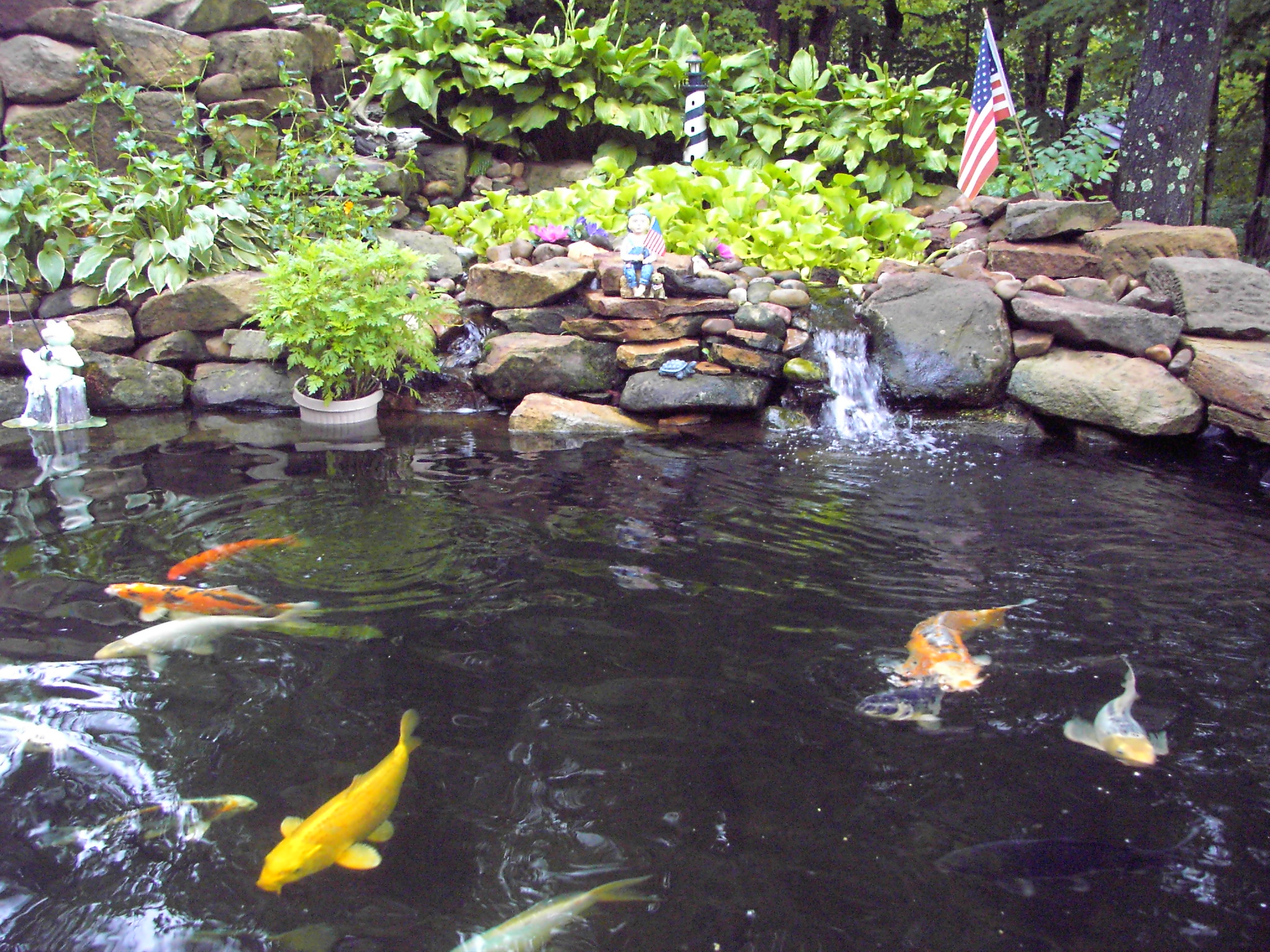 Beautiful koi fish pond images for Koi fish farm